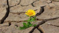 La Resiliencia y su relación con la vivencia y el hecho disruptivo